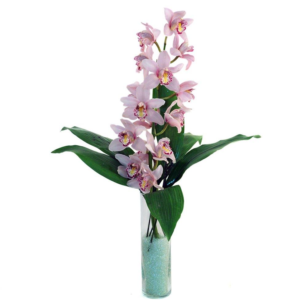 Orchidea confezionata acquista online fiori a piacenza for Costo orchidea