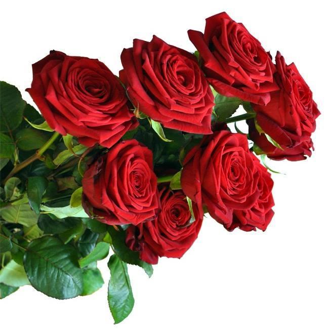 Super Mazzo di rose rosse a gambo lungo. - ACQUISTA ONLINE FIORI a  MC67